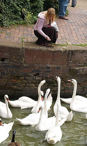 nalladj Feeding the Swans