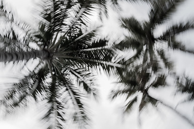 Abstract of Palm