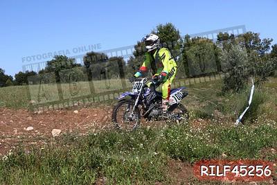 RILF45256