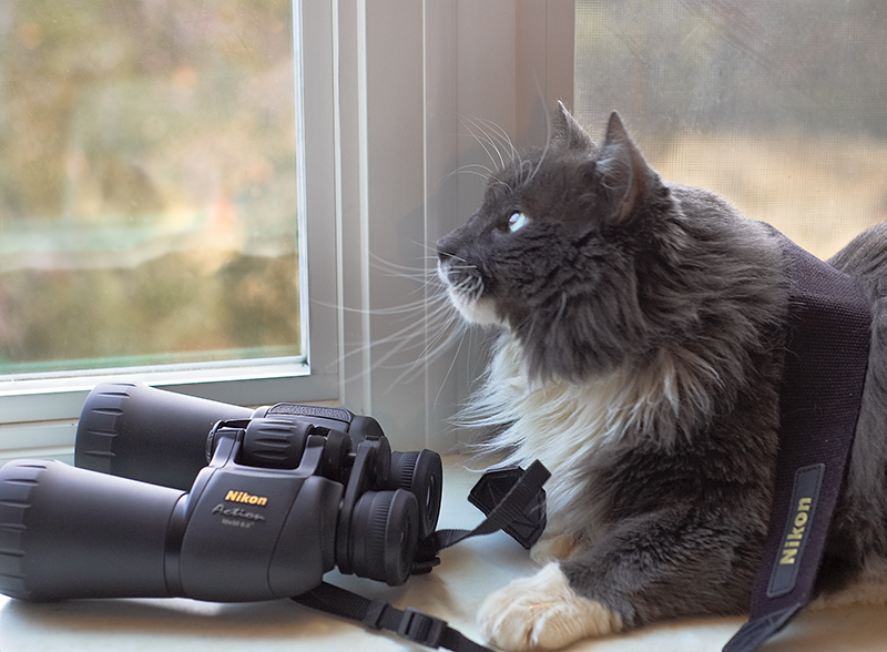 """Bird Watching""  Section: Professional Enlargements Class: Humor  Place: <b><font color=""blue"">1st</font></b>"