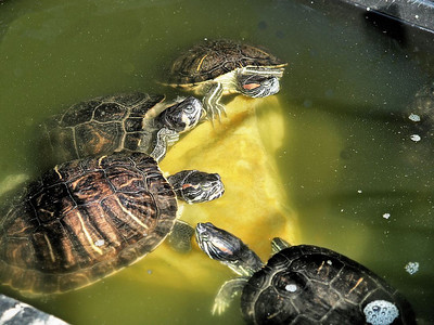 """fbyrnes Arnt they cute and cuddly, Ive titled this """"psst, were breaking out of here tonight, pass it on"""""""