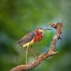Ttile:  Tri-colored heron on perch<br /> Category:  Nature<br /> Maker:  Wayne Tabor<br /> Score:  12 September 2009