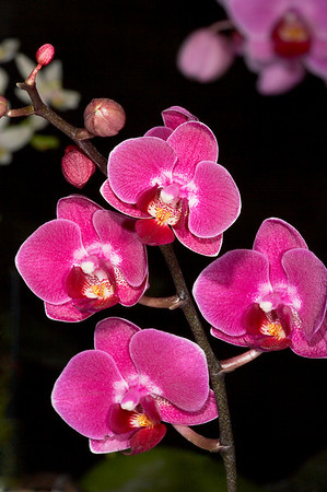 Title:     Orchids #1<br /> Maker:    Wilfred Smith<br /> Catagory:  Large Color<br /> Score:11 April 2009