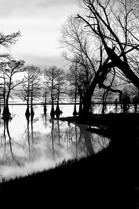 Caddo Lake Sunset By Wilfred Smith Large Monochrome Score   13 August 2009