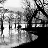 Caddo Lake Sunset<br /> By Wilfred Smith<br /> Large Monochrome<br /> Score   13 August 2009