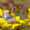 """Checkered White""<br /> by Wayne Tabor<br /> Nature<br /> Score: 12 February 2009"