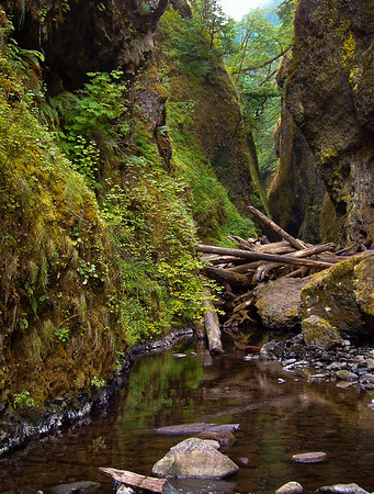 Oregon Gorge<br /> Open Color<br /> 12<br /> Loleta Holley May 2009