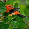 High Island Tanger  - Nature<br /> Score 12<br /> Dwayne Anders October 2009