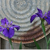 """Iris X 2""<br /> Maker: Glenda Collums<br /> Category: Non-traditional<br /> Score: 12 January 2009"