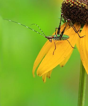 Title:  Katydid nymph<br /> Category:  Nature<br /> Maker:  Wayne Tabor<br /> Score:  12 September 2009