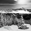 Timberline Ski Trail<br /> by Loleta Holley<br /> Monochrome<br /> Score: 14 April 2009