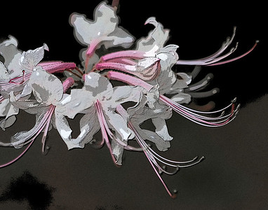 Title: Abstract Azalea Maker: Glenda Collums Category: Non-Traditional Score: 11 June 2009