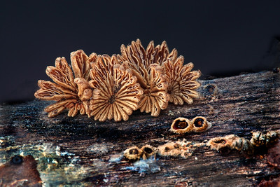 Coral funji macro by Wayne Tabor Nature Score: 12 March 2009