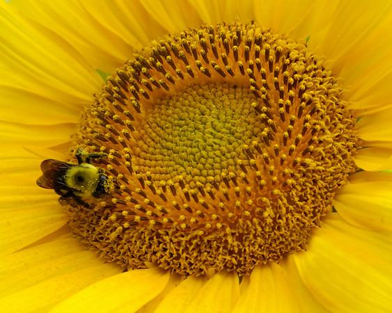 Category: Open Color<br /> Maker: Bill Carroll<br /> Title: Bee One '09<br /> Score: 11 July 2009