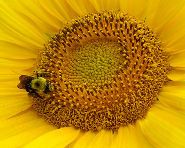 Category: Open Color Maker: Bill Carroll Title: Bee One '09 Score: 11 July 2009