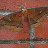 Title: Moth on Bricks<br /> Maker: Glenda Collums<br /> Category: Non-Traditional<br /> Score: 13 April 2009