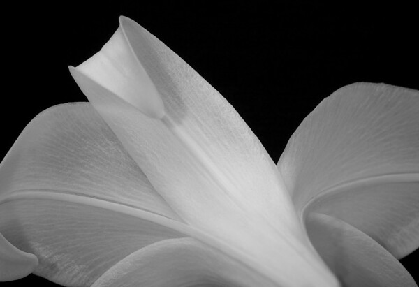 Title: Artic White<br /> Maker: Glenda Collums<br /> Category:  Large Black & White<br /> Score: 11 August 2009