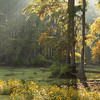 """Flowers in the Swamp""<br /> by Wayne Tabor<br /> Open Color<br /> Score: 11 February 2009"