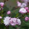 Title: Flowering Almond<br /> Maker: Glenda Collums<br /> Category: Non-Traditional<br /> Score: 11 April 2009