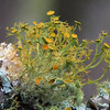 Title:  Tiny Forest<br /> Maker:  Wayne Tabor<br /> Category:  Nature (macro)<br /> Score:  11 April 2009