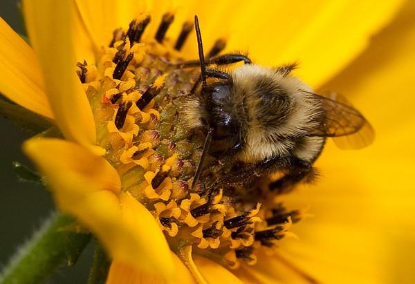 Title: Bee @ Dinner<br /> Maker: Glenda Collums<br /> Category: Open Color<br /> Score: 12 October 2009