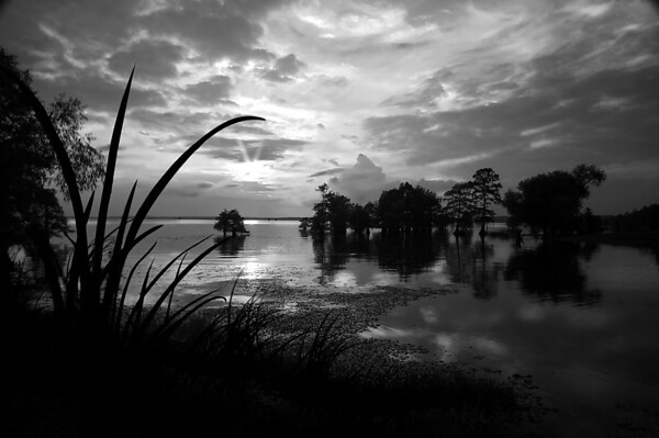 Caddo Lake #3<br /> Maker:   Wilfred Smith<br /> Catagory:   Large Black and White<br /> Score:  11