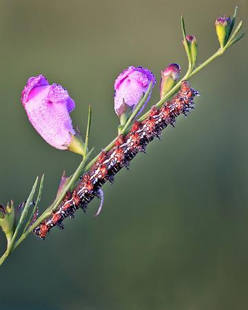 Catapillar on Flower<br /> by Wayne Tabor<br /> Open Color<br /> Score:  13