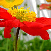 Title: Poppy Delight<br /> Maker: Glenda Collums<br /> Category: Non-Traditional<br /> Score: 11