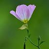 Brazos - Flower  -  Large Color<br /> Score 12<br /> Dwayne Anders