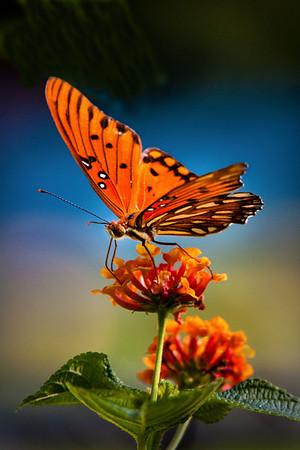 Butterfly backlit<br /> Maker:  Wayne Tabor<br /> Category: Open color<br /> Score:  11