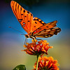 Butterfly backlit<br /> Maker:  Wayne Tabor<br /> Category: Open color<br /> Score:  11