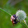 Sleeping Bee<br /> by Wayne Tabor<br /> Nature<br /> Score 13