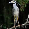 Brazos - Heron  -  Nature<br /> Score 14<br /> Dwayne Anders
