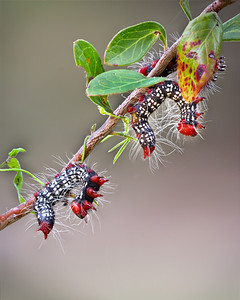 Catapillar Dance by Wayne Tabor Category:  Nature Score:  13