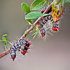 Catapillar Dance<br /> by Wayne Tabor<br /> Category:  Nature<br /> Score:  13