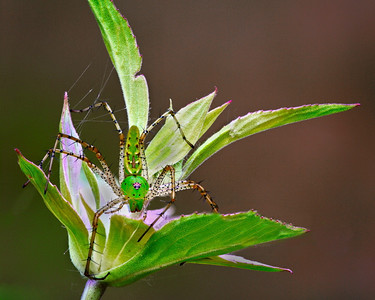 Green spider defending flower Maker:  Wayne Tabor Category:  Nature Score:  12