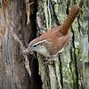 Nest Building  - Nature<br /> Score 13<br /> Dwayne Anders