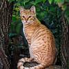 Maker:  Dwayne Anders<br /> Title:  Shop Cat<br /> Category:  Pictorial<br /> Score:  11