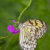 Maker:  Dale Lindenberg<br /> Title:  Butterfly on Flower<br /> Category:  Macro/Close Up<br /> Score:  12