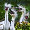 Maker:  Dale Lindenberg<br /> Title:  Bad Hair Day<br /> Category:  Wildlife<br /> Score:  15