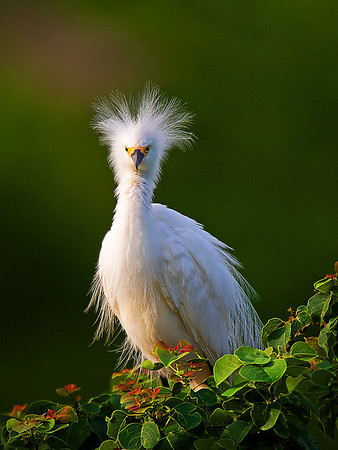 Maker:  Dwayne Anders<br /> Title:  Hair Day<br /> Category:  Wildlife<br /> Score:  13