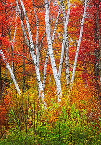 Maker:  Wayne Tabor Title:  Vermont Scene Category:  Pictorial Score:  12