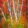 Maker:  Wayne Tabor<br /> Title:  Vermont Scene<br /> Category:  Pictorial<br /> Score:  12