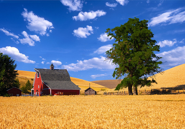 Maker:  Wayne Tabor<br /> Title:  Wheat Farm<br /> Category:  Pictorial<br /> Score:  12