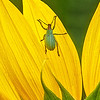 Maker:  Wayne Tabor<br /> Title:  Small Beauty<br /> Category:  Macro/Close Up<br /> Score:  13