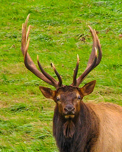 Maker:  Dale Robertson Title:  What You Looking At Category:  Wildlife   Score: 12
