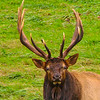 Maker:  Dale Robertson<br /> Title:  What You Looking At<br /> Category:  Wildlife  <br /> Score: 12