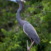 Maker: Dirk J. Sanderson<br /> Title:  Bird In Tree<br /> Category:  Wildlife<br /> Score:  13