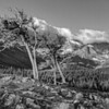 Maker:  Wayne Tabor<br /> Title: Windy Hill<br /> Category:  Black & White<br /> Score:  12