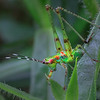 Maker:  Dale Lindenberg<br /> Title:  Grasshopper<br /> Category: Macro<br /> Score: 12